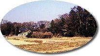 『栗橋城があったとされる場所』の画像