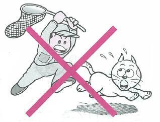 のら猫の捕獲・駆除は実施していません