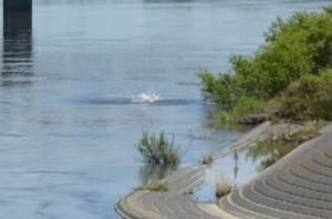 『7月5日利根川の様子』の画像