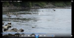 7月20日動画(動画提供:小林一郎氏)