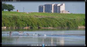 『H30.7.1 ハクレンジャンプ動画(小林一郎氏提供)』の画像