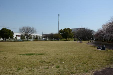 童夢公園(桜並木)
