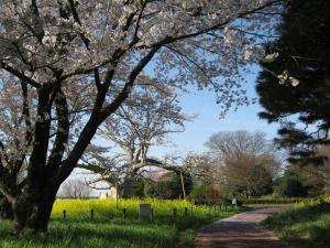 中の島公園(園内)