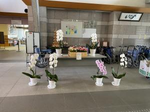 花き展示(ひばり)