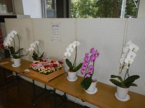 花き展示(中央公民館)