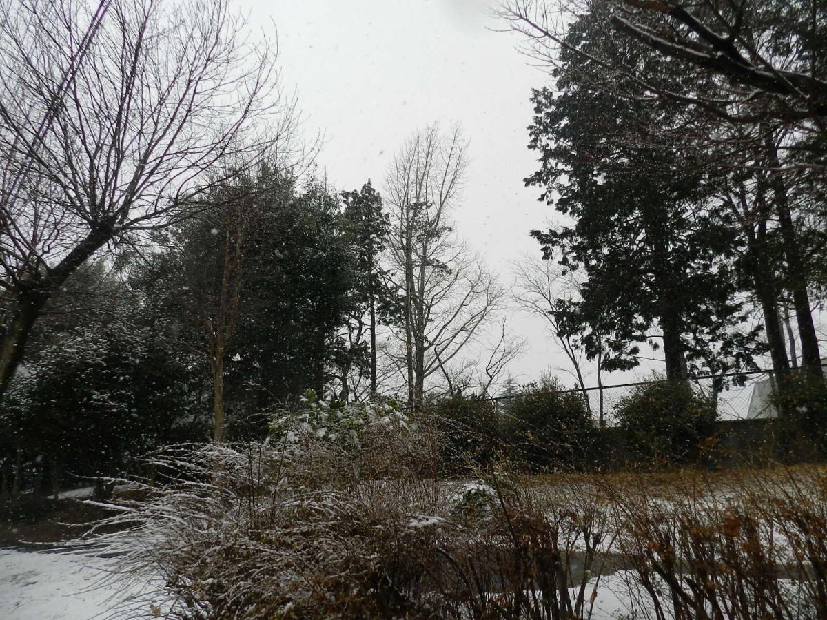 2015雪