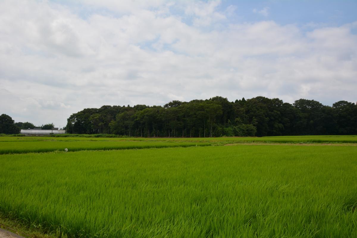田んぼの風景(H28.7.20)